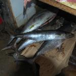 Dockside Food Markets 10