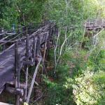 The walk-bridge through the jungle