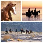 Sharm Equestrian Private Day Trips