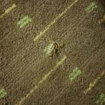 Dead Bug In the room