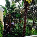So tropical!