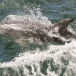 More dolphins than the dolphin tour!
