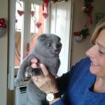 gatto scottish