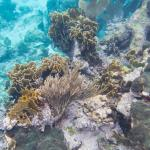 Turneffe Reef
