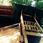 View from bottom of tree house