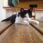 Aluna, the coolest cat in Colombia