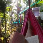 Jungle view from my hammock