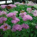 Fleurs et papillons : explosion de couleurs !