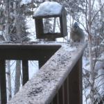 Bird at deck feeder