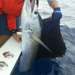 Lone Sailfish caught that day in the area