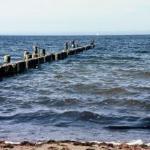 Weedy beach