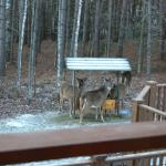Enjoying breakfast with the deer