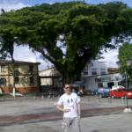 Ceiba junto a la Catedral