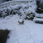 Snowy Garden with Fifi