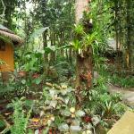 Garden view (119905380)
