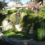 Waterfall and pond at Ojai Retreat