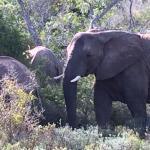 Foto de Bush Lodge - Amakhala Game Reserve