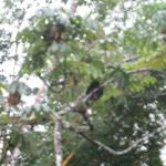 Sloth in tree in their courtyard
