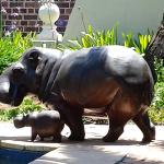Hippo nast de pooli