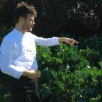 In the kitchen garden