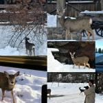 just few of the 100 deer that we spotted close to our room