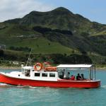 Mokau River Cruises