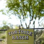 Tortoise Ranch