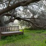 A quiet seat under an olive tree on the grounds