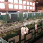 Aquariums used for keeping the fishes, lobsters, prawns, oysters, etc.
