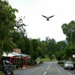 main street in front of cafe, with native dove photo bombing the pic