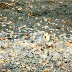 Birds and shells litter the beach, in a very nice way.