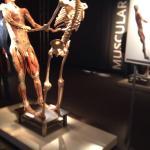 The Body Exhibit Foto