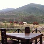Pferde vor der Lodge