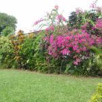 Tropical gardens at Hexagon