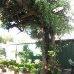 Beer garden tree