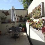 the sunny patio and Diana's fabulous container garden