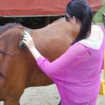 Helping the horse relax after carrying me up and down the mountain.