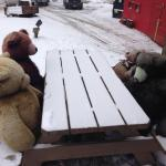 Bears braving the below zero weather!