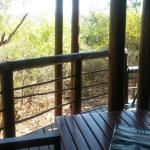 View from the luxury tent patio towards the bush