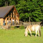 Fjord horse in pasture in front of cookhouse