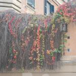 vegetação em frente ao hotel
