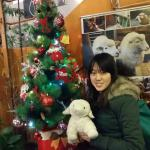 Their Xmas tree and multiple sheep decoration