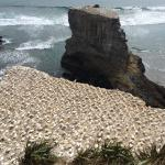 Visit the gannet colony... AMAZING!!!!