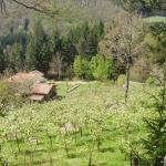 Photo of Casale Camalda - Organic Farm