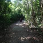 Dagney Johnson Hammock Botanical State Park Key Largo FL