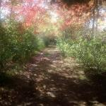 Walking on the nature trail in autumn