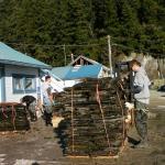 Taylors Shellfish Farm