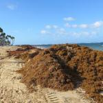montagne d'algues sur la plage