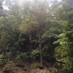 Tree on ledge