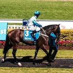 Magic millions guineas colt Testashadow